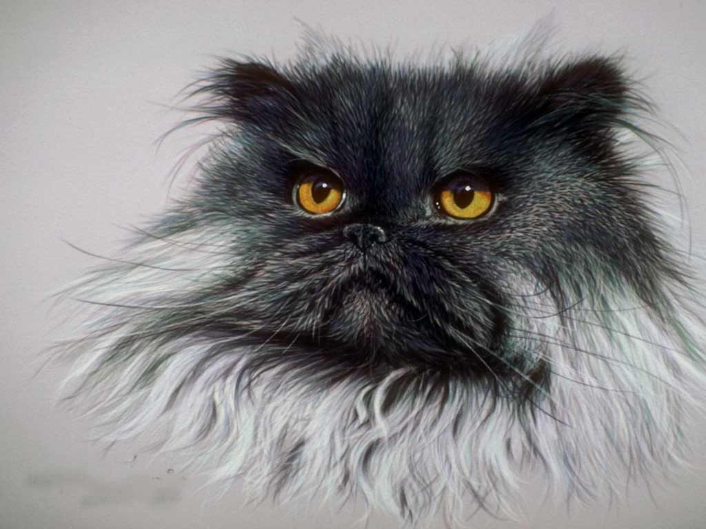 Картинки кошек больших