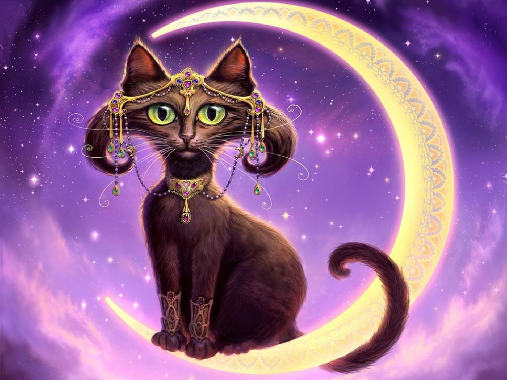 картинки кошки красивые рисунки