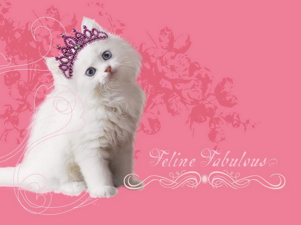 Wallpapers cats 258 güzel süslü kedi fotoğrafları beautiful