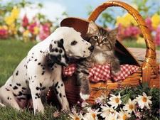 Лучшие обои с котятами и щенками