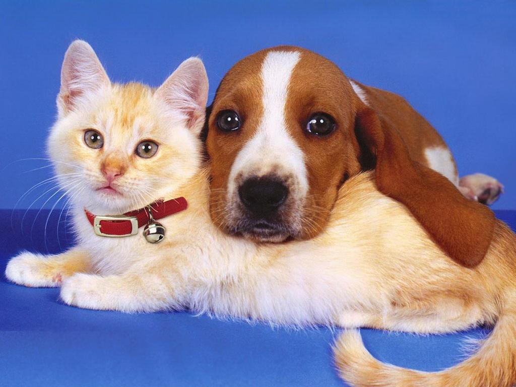 Собака с котом картины