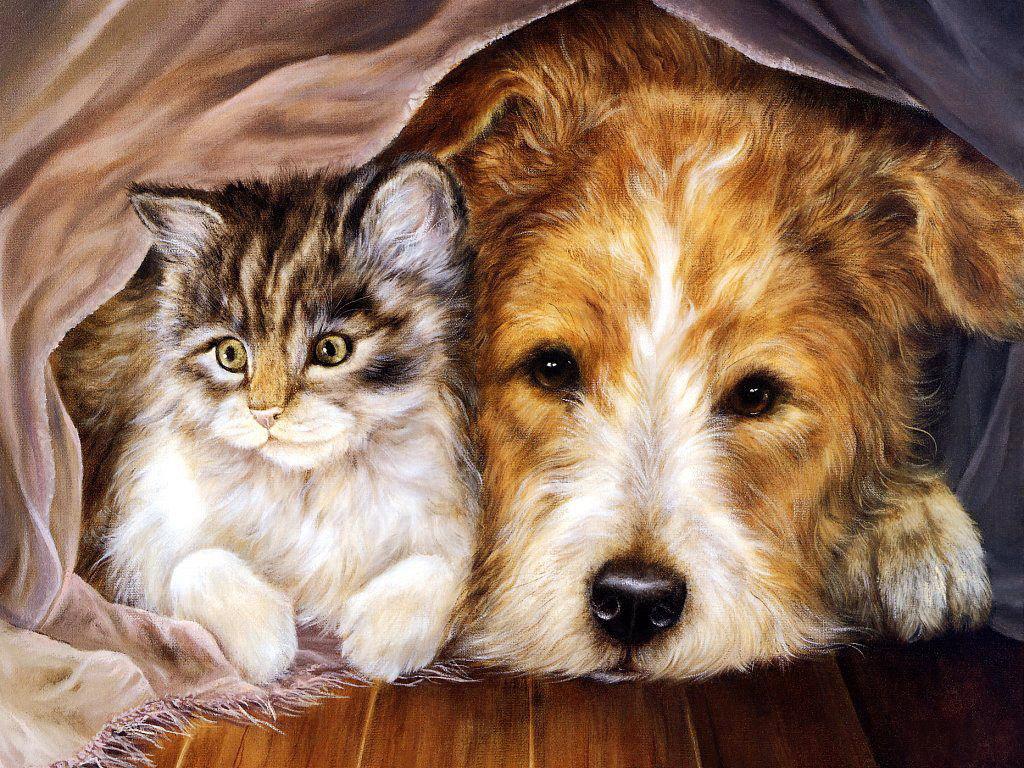 Котята красивые раскраски