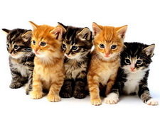 ���� �����. Wallpapers cats.