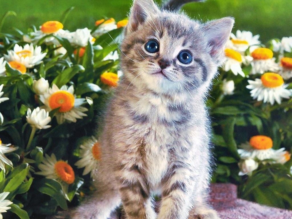 Лапочка Котик 9 жизней.  Что, по вашему напоминает это фото?