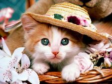 Котенок в шляпе.