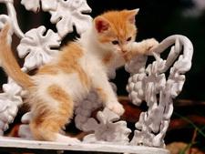 Обои кошки. Wallpapers cats.