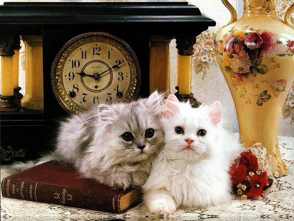 Аристократические котята