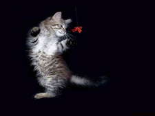 Обои кошки wallpapers cats