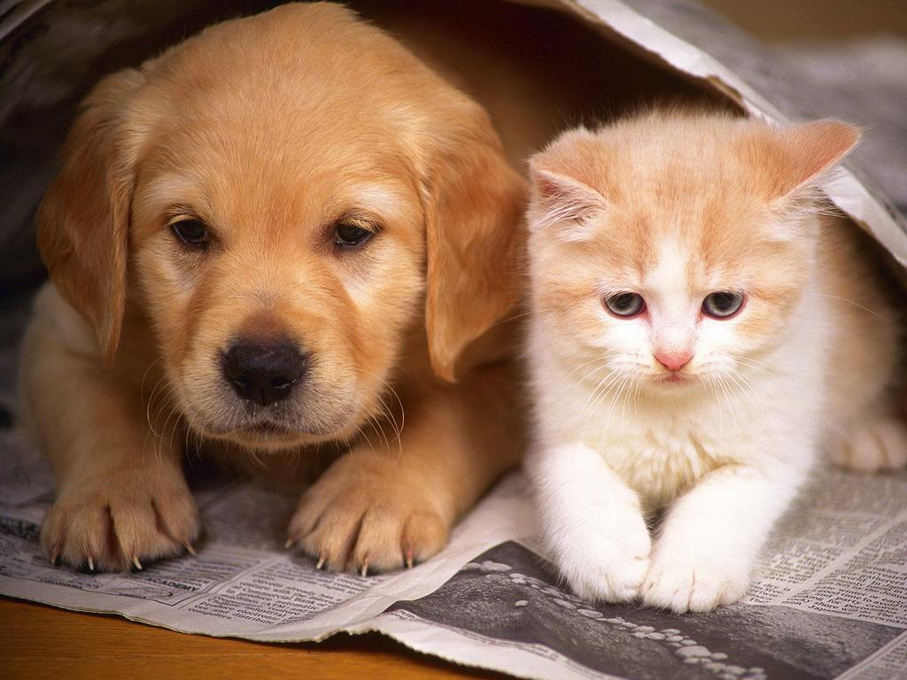 Рулончик обоев с кошками 1 2 3 4 5 6 7 8 9 10 11