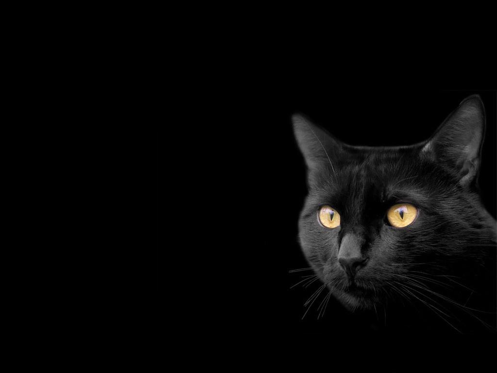 фотообои черные: