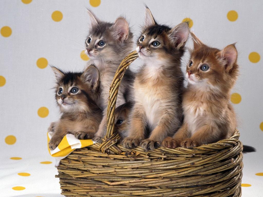 арты котов на рабочий стол