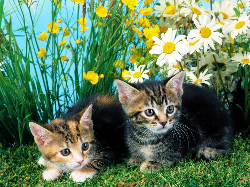 Фото котов в ромашках