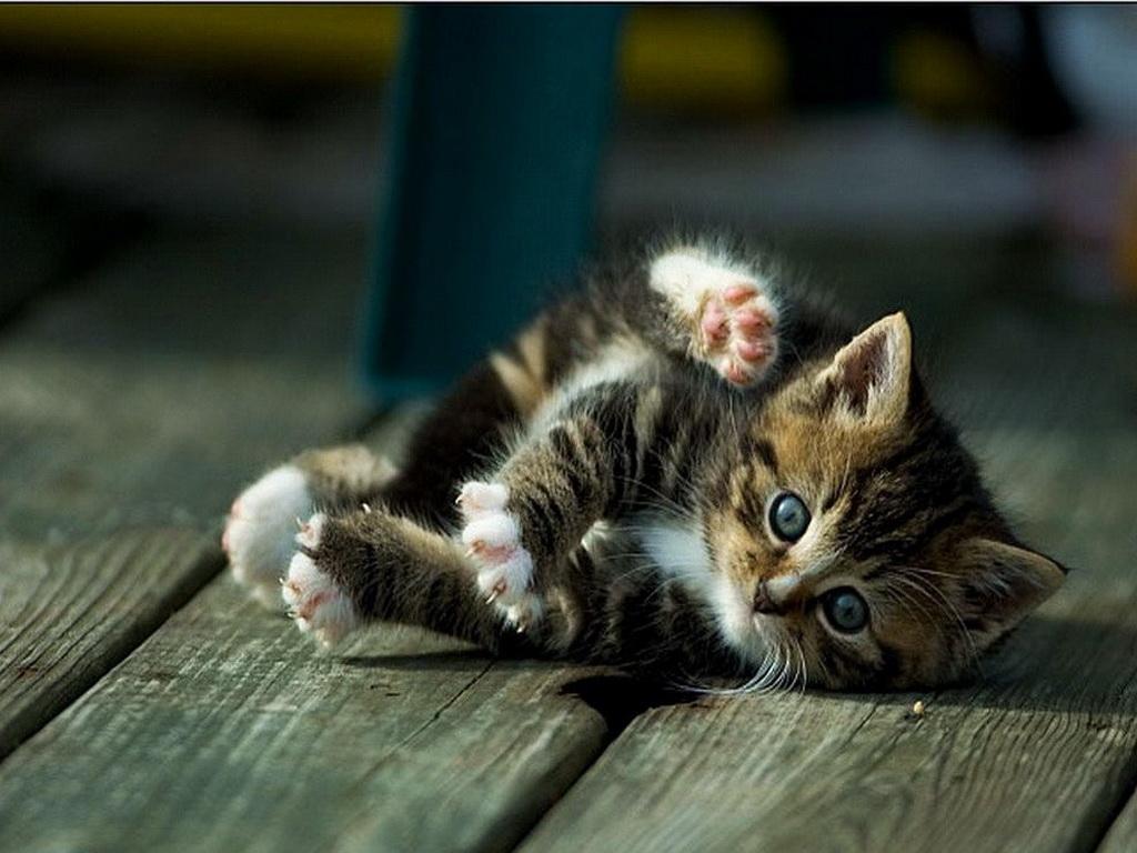 котята обои: