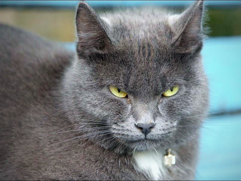 Серый кот арты