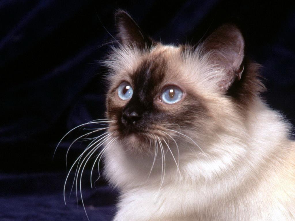 Красивые кошки картинки