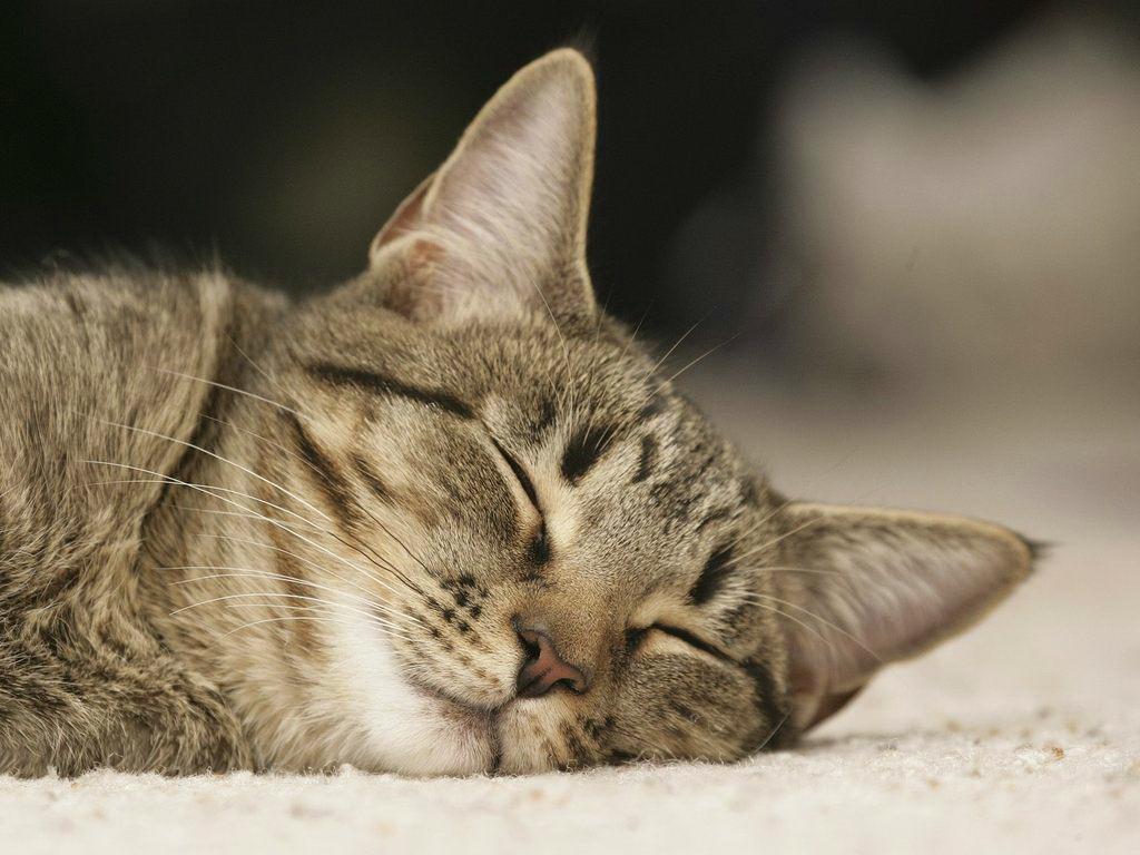 Фото спящая киска 8 фотография