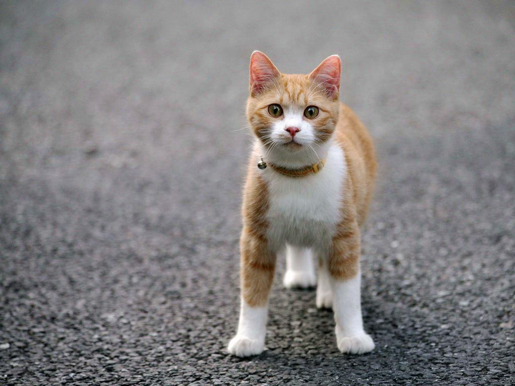 картинки на рабочий крутых котов