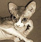 картинки с котами для рабочего стола