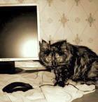 на главную страничку сайта кошки Масяни