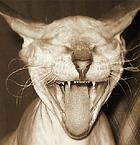 кот смеётся с анекдота