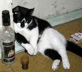 И фотоприколы с котами и котятами