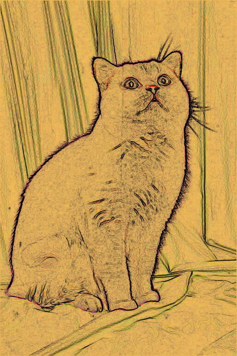 Книга рисунки о котах