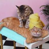 Прикольные истории о котах Cats-50