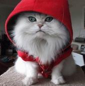 Прикольные истории о котах Cats-63