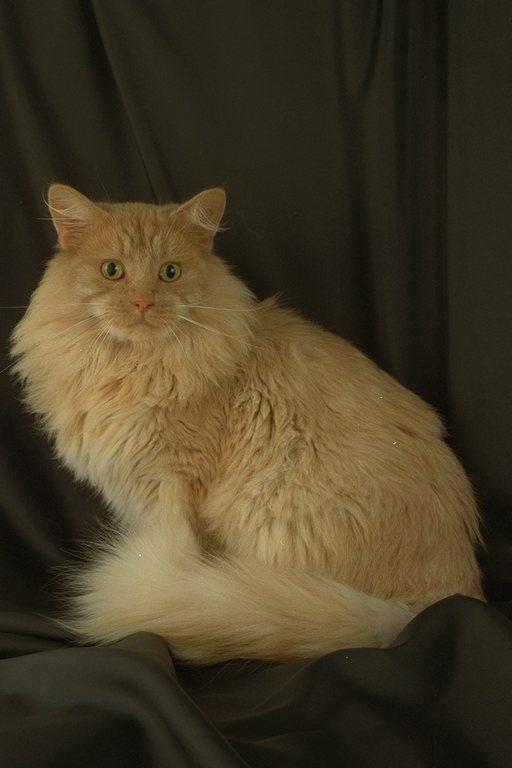 Энергетическая магия кошки.  Кошки.Заборные творения.